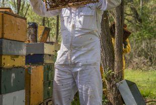 Ogni colore alle api.