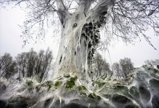 Ghost tree