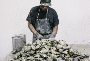 Oyster Shucking. Workers, caked in mud, shuck oysters from 4 - 11am weekdays in Crisfield, Md. at MeTompkin Seafood. The more oysters they crack open, the more money they make. Some workers can shuck 5,000 oysters a day. © Greg Kahn
