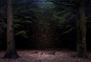 Stars 8, 2014.