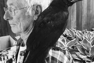 Dad's Raven Zorro