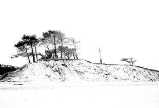 línea de árboles