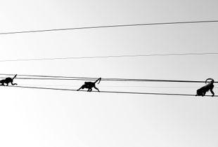 Acrobatic Monkeys