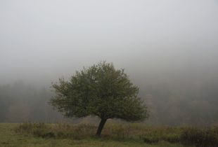 Muted Beauty© Edith Gould