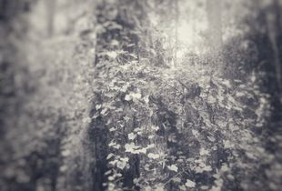 Forest Bathing #1