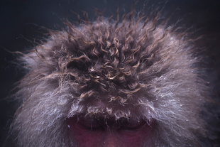 Snow Monkey-07