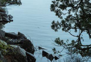 Lakeside Look Through the Cedars
