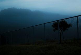 Sweet Blue Mist