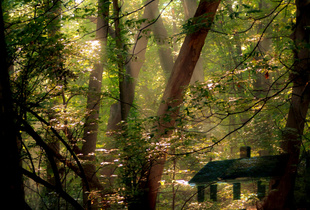 This Old House in the Early Morning Forest