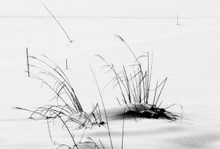 Snow Study; landscape