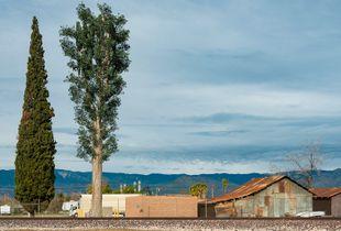 Fauxliage–San Bernardino Eucalyptus