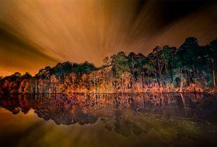 Mist Rays Crown Swamp