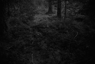 "Entry. From the series ""The Forest"" © Ken Rosenthal"
