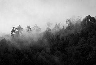 Bosque de Huilo Huilo