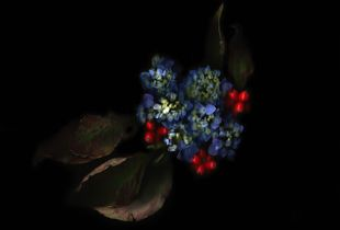 Hydrangea, berries, dried leaves