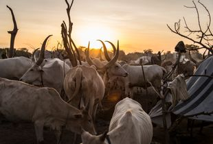 Bor Cattle Camp, South Sudan