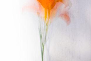 Sognando un fiore
