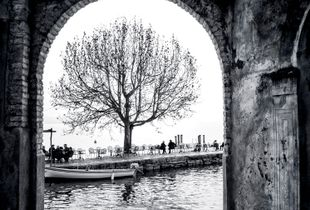 Tree at Lake Garda