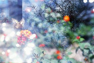(untitled) flower flower water light