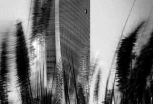 Wind of modernity