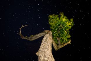 """""""Lady"""" Tree in Awe of Cosmos?"""