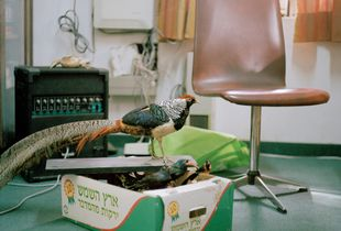 Taxidermy birds on cardboard fruit box, Manager's office