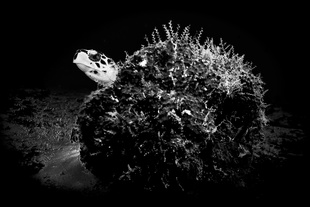Sea turtle and reef