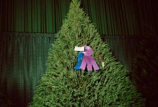Bests (tree), 2014