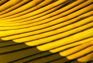 Dorado en las Bananeras 1
