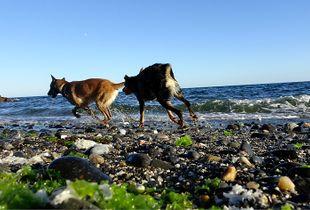 Dogs, Marbella , Spain