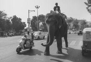 По улице слона водили..
