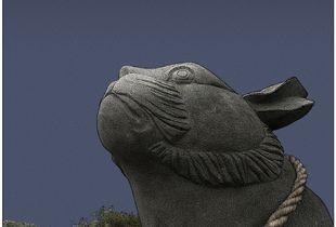A rabbit at Gassan Jinja Shrine, Yamagata