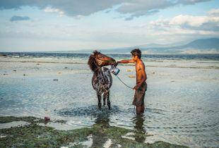 Bali, man and his horse