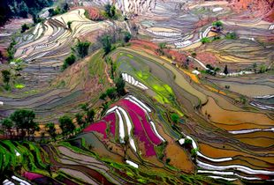 Beauty Paddy of China. Finalist, LensCulture Earth Awards 2015.
