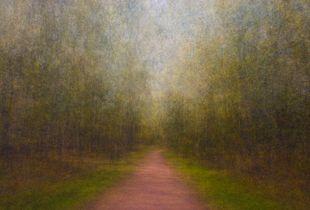 Path 15, 2011