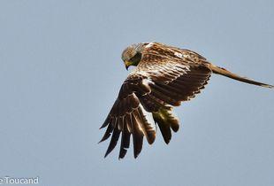 Feather cloak