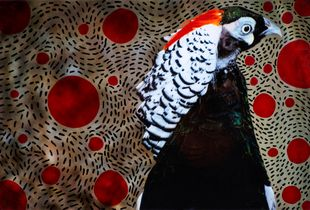 Techno bird The Lady Amherst's pheasant