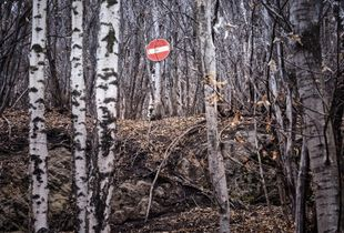 woods 01