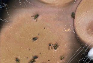 Boobs & Bugs