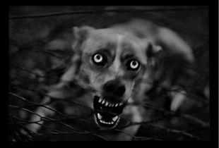 """""""Untitled"""" (Dog), 2006 © Giacomo Brunelli"""