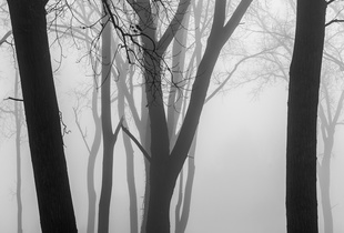 Forest Fog 1