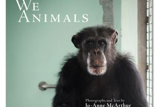 We Animals, Book Cover