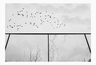 Fence-1