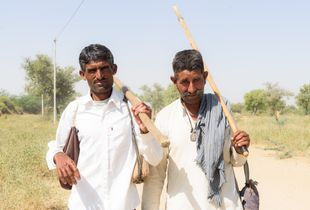 Shepherds stop briefly in the mid-morning sun, on the dusty lanes of a village in Jodhpur.