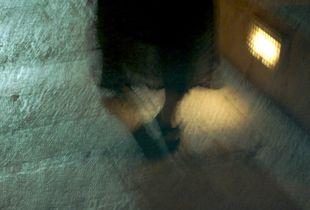 Lace© Katharine Frankel