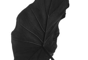 Black Leaf 01