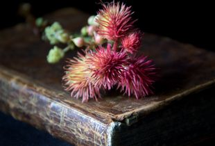 Ricinus with Book, 2016