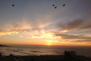 Hadedas taking flight with the sunrise