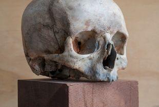 Real female skull
