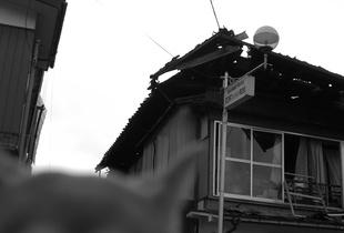 Dog after earthquake.